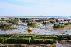 Pontos Aquakultur